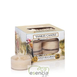 YANKEE TEA LIGHT WILD SEA GRASS