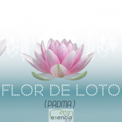ON THE CAR FLOR DE LOTO