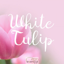 ON THE CAR WHITE TULIP