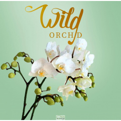 ON THE CAR WILD ORCHID